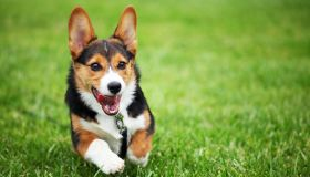 Happy Puppy Running through Grass