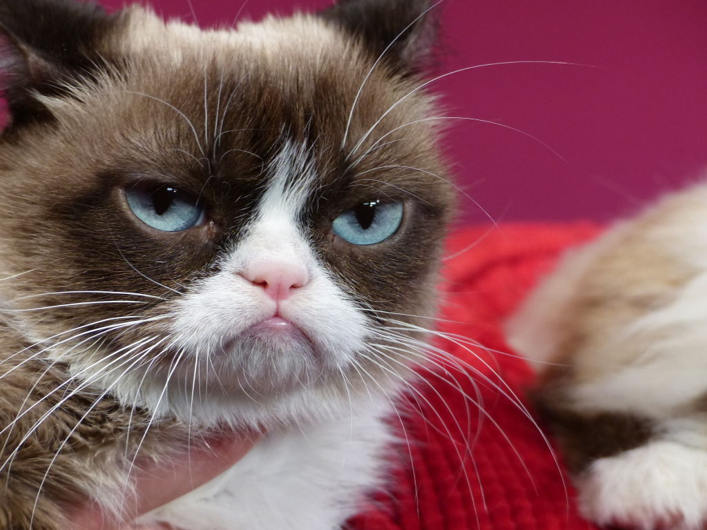 Grumpy Cat at Madame Tussauds