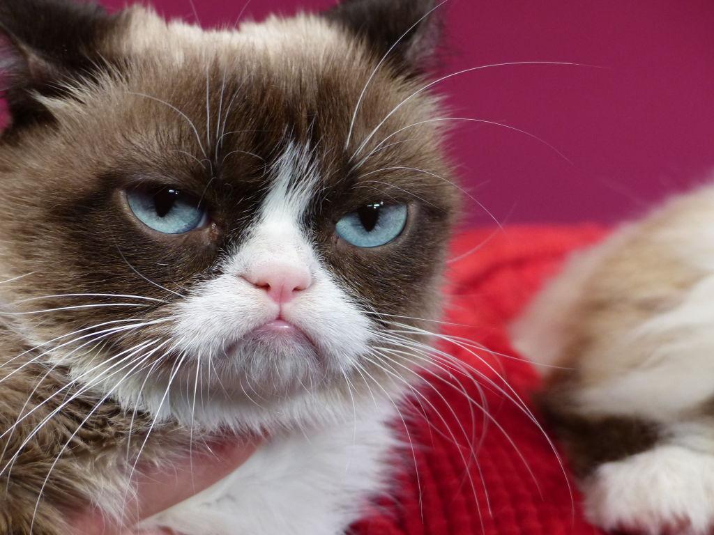 Grumpy Cat at Madame Tussauds