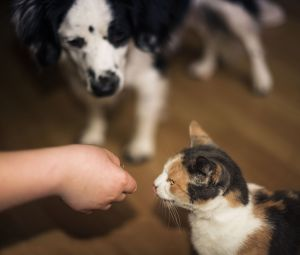 Caring for Your Pets - POV